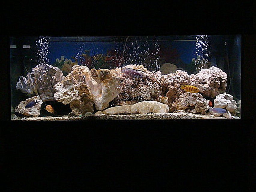 Rated #3: 75 Gallons Freshwater Fish Tank - revamped