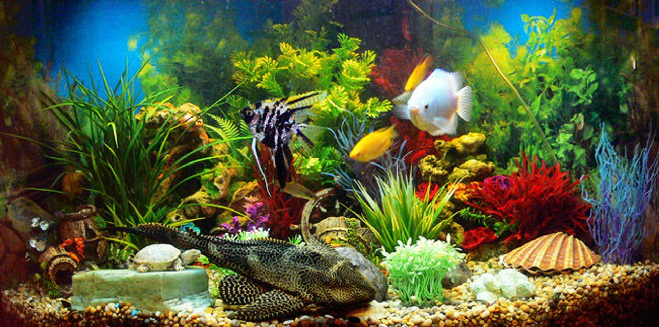 Rated #62: 50 Gallons Freshwater Fish Tank - Main view of tank