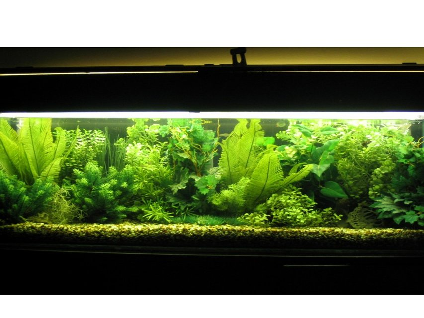 Rated #31: 52 Gallons Freshwater Fish Tank - fully planted tank all plastic plants