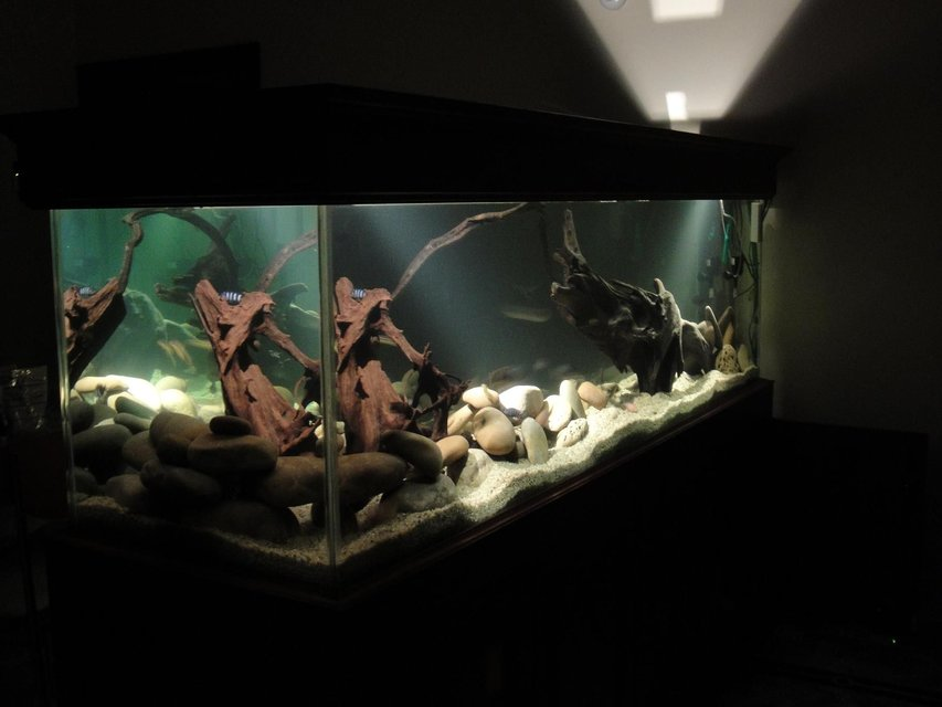 Rated #43: 209 Gallons Freshwater Fish Tank - ...