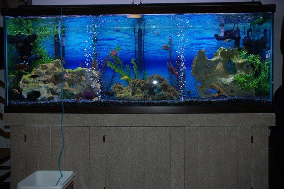 Rated #51: 150 Gallons Freshwater Fish Tank - 150 gallon African Cichlid tank