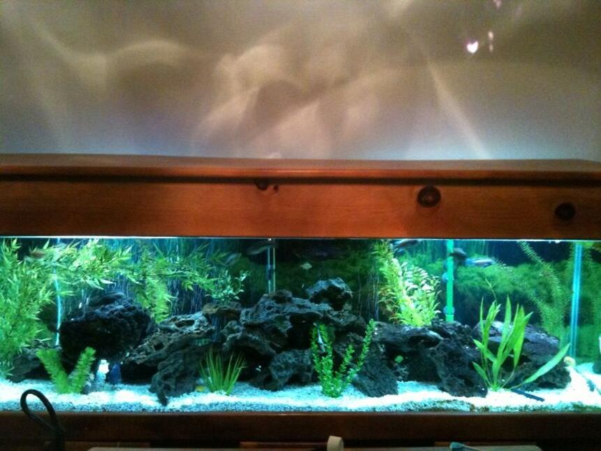 Rated #88: 125 Gallons Freshwater Fish Tank - 125 gallon tank