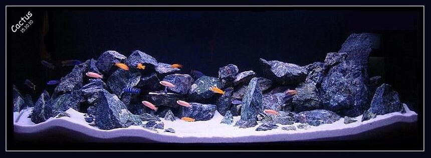 Rated #20: 120 Gallons Freshwater Fish Tank - Rocky Hills