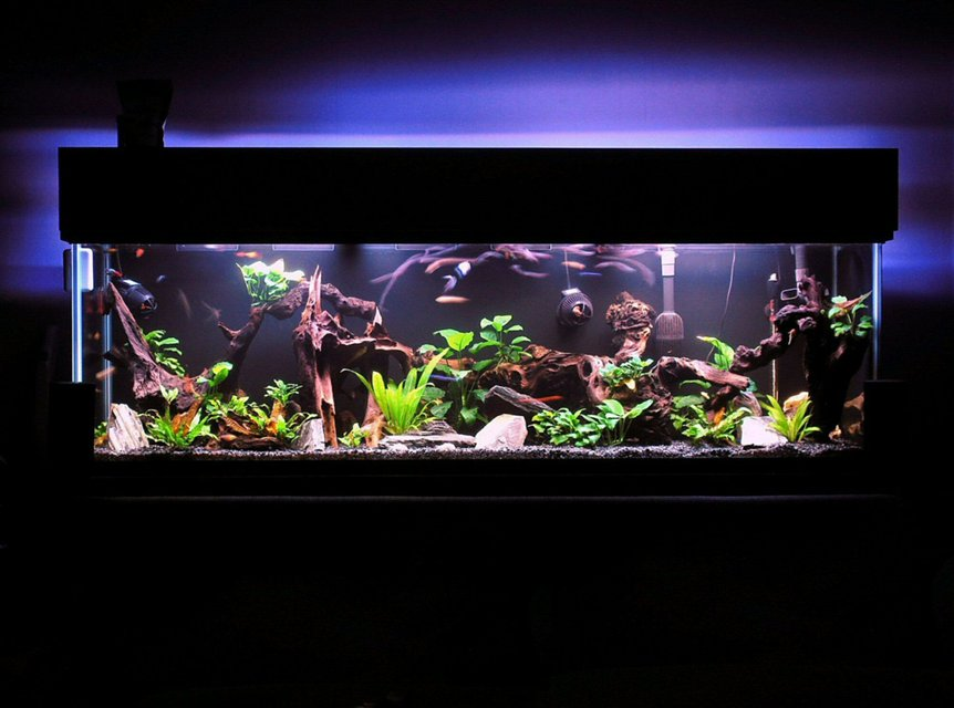 Rated #1: 125 Gallons Freshwater Fish Tank - I have gotten lost in this magical place MANY a night.