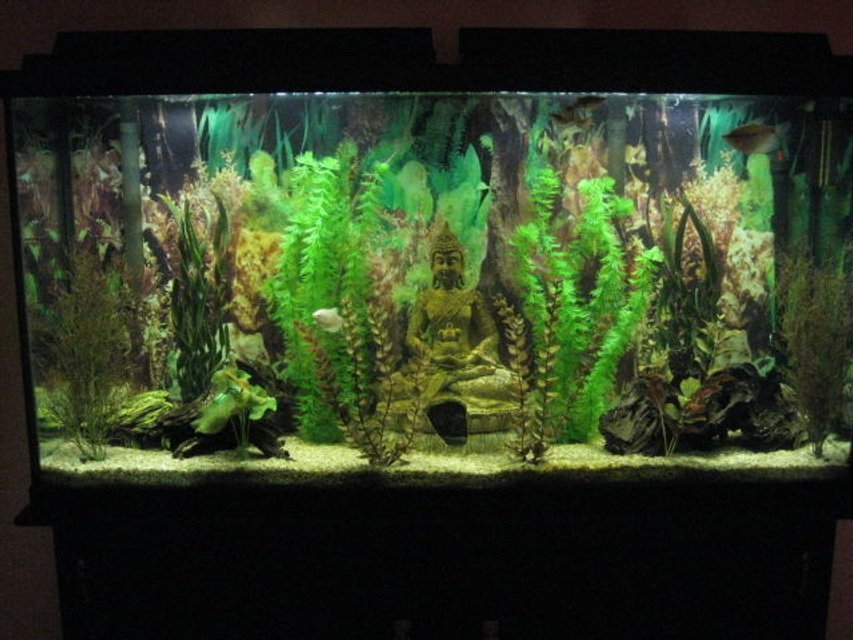 Rated #91: 60 Gallons Freshwater Fish Tank - 60 gallon freshwater fish tank