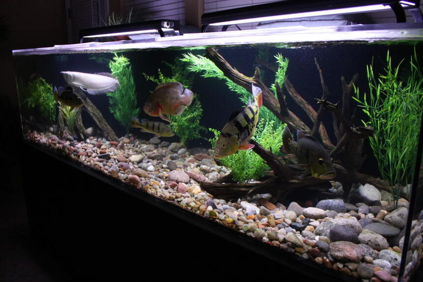 Rated #89: 350 Gallons Freshwater Fish Tank - 350 gallon South American