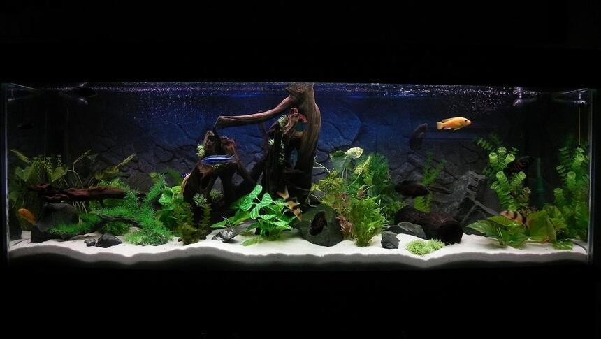 Rated #11: 180 Gallons Freshwater Fish Tank - 6x2x2, 180 gal