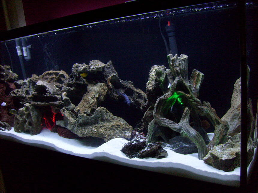 Rated #55: 55 Gallons Freshwater Fish Tank - My 55 gal cichlid tank w/Lake Malawi cichlids...white sand...2 underwater lights...green and red.  Lace Rock. Using a fluval 305 canister filter. An overhead dual coral life aquarium lite w/one blue bulb and one white bulb.