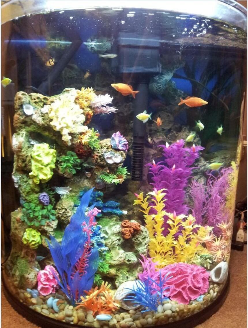 Rated #59: 30 Gallons Freshwater Fish Tank - 30 gallon half moon