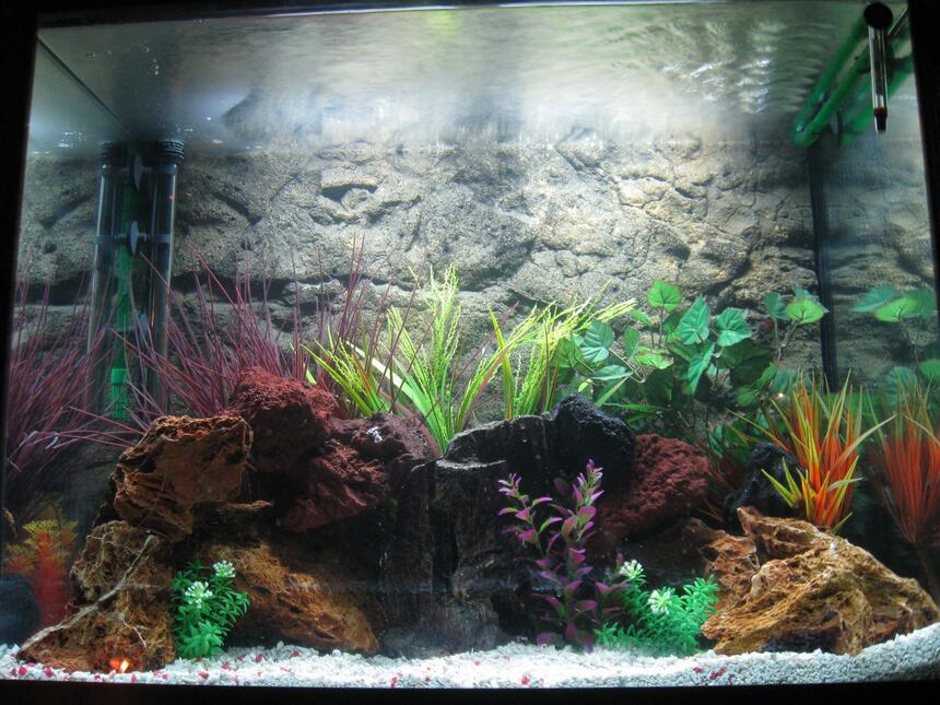 Rated #25: 56 Gallons Freshwater Fish Tank - my first tank, 56 gallon, cichilds to come