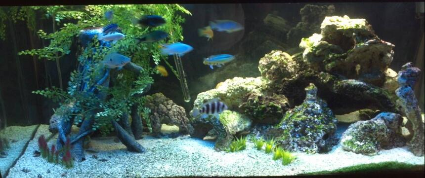 Rated #26: 75 Gallons Freshwater Fish Tank - Mixed