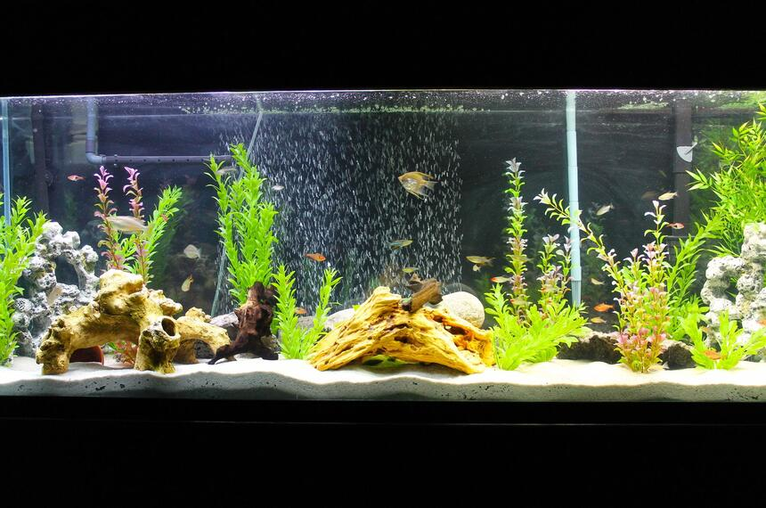Rated #60: 135 Gallons Freshwater Fish Tank - My 135 gallon freshwater setup