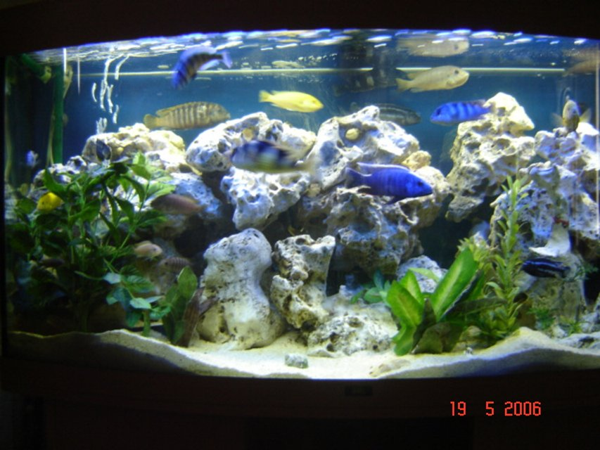 Rated #13: 70 Gallons Freshwater Fish Tank - Jewel Vision 260 tank with Malawi Mbuna Cichlids