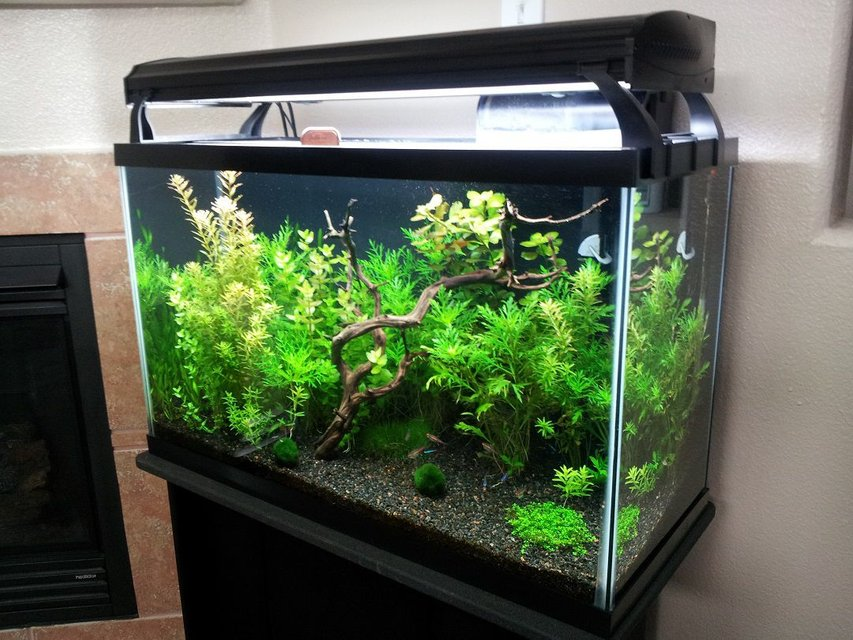 Rated #12: 29 Gallons Freshwater Fish Tank - My 29 gallon tank at around 6 weeks old.
