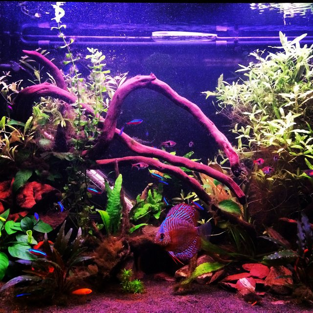 Rated #73: 75 Gallons Freshwater Fish Tank - My planted tank
