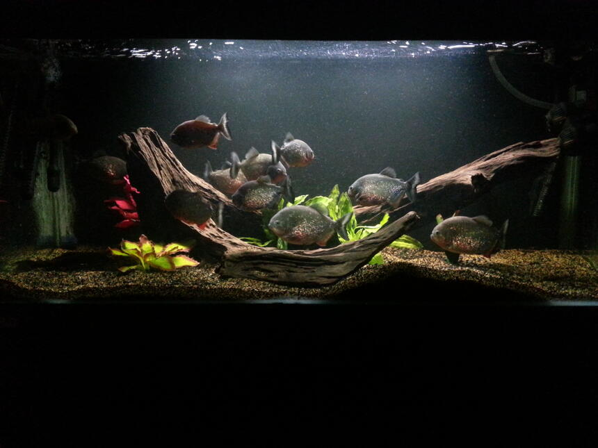 Rated #36: 160 Gallons Freshwater Fish Tank - My main tank
