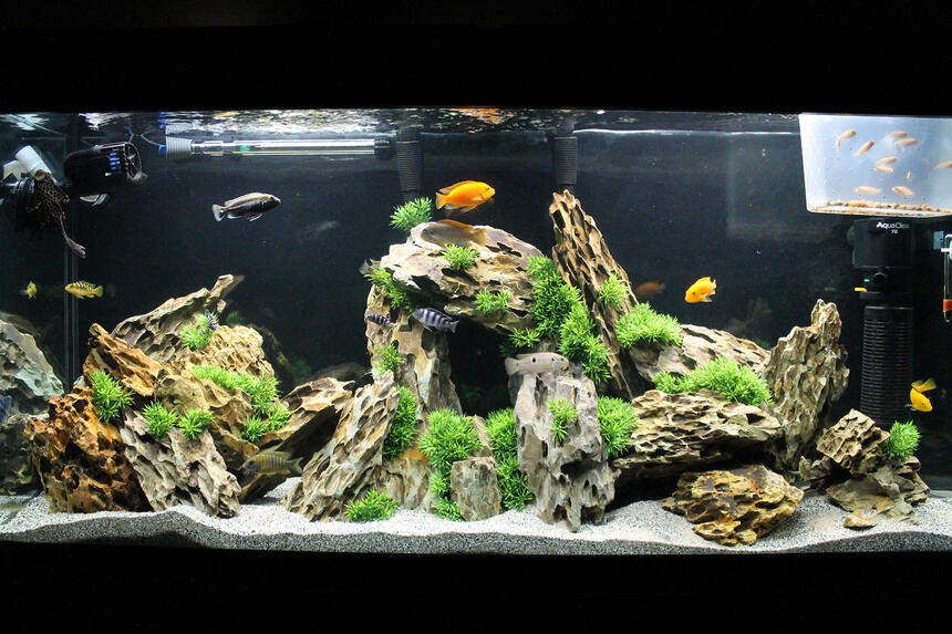 Rated #9: 60 Gallons Freshwater Fish Tank - 60g Marineland Heartland Setup
