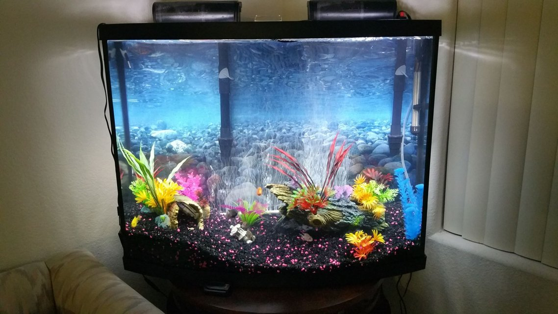 Rated #73: 38 Gallons Freshwater Fish Tank - 38 gal freshwater african cichilds