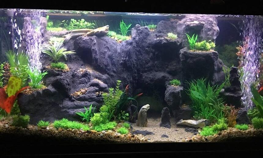 Rated #58: 75 Gallons Freshwater Fish Tank - West Africian Biotope(ish) I'm not super strict.
