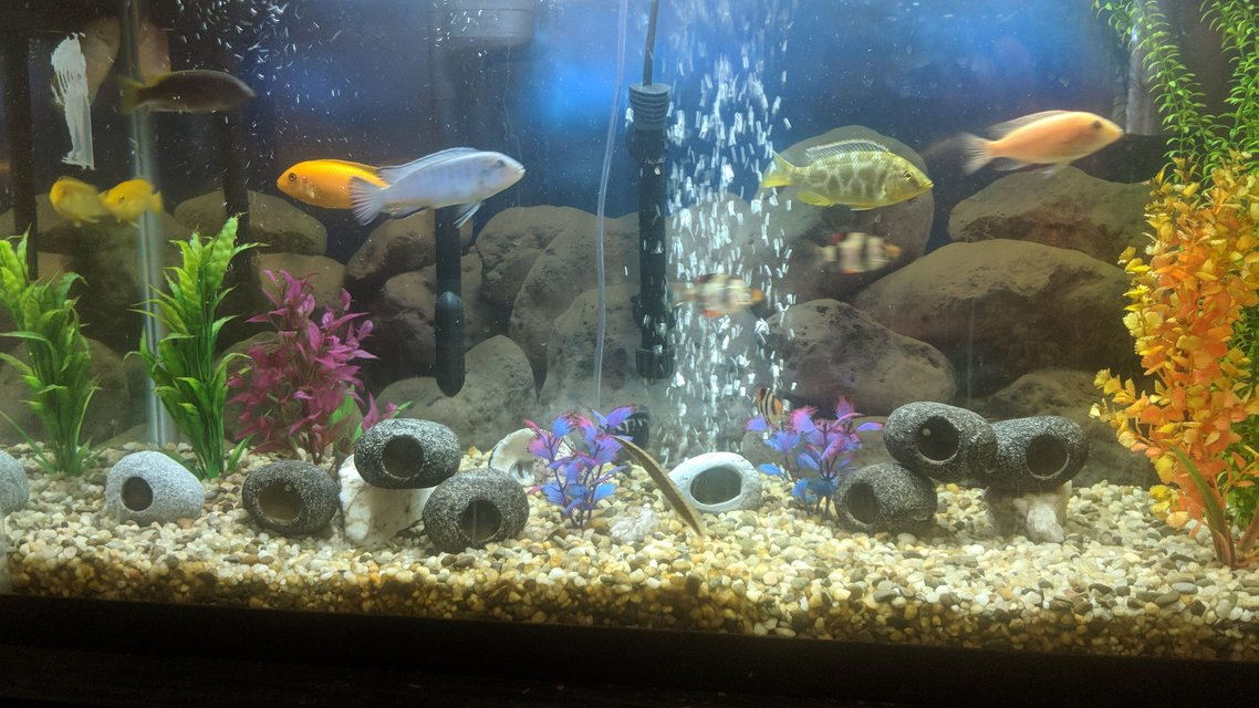 Rated #32: 48 Gallons Freshwater Fish Tank - My tank