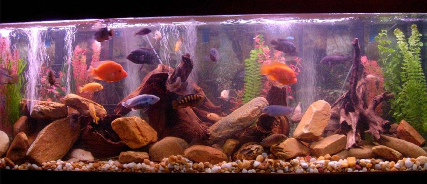 Rated #83: 125 Gallons Freshwater Fish Tank - Lots of fish having a great day