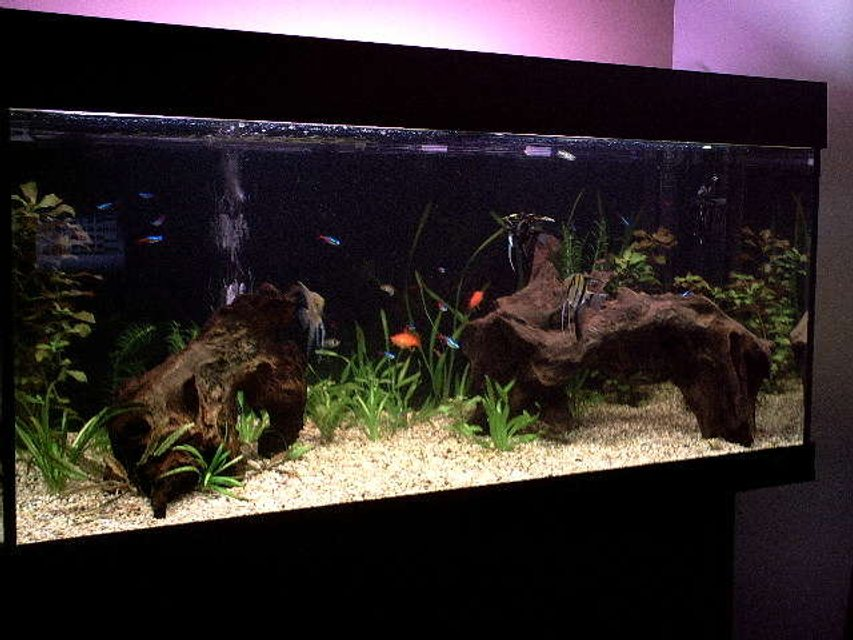Rated #21: 40 Gallons Freshwater Fish Tank - my fish tank