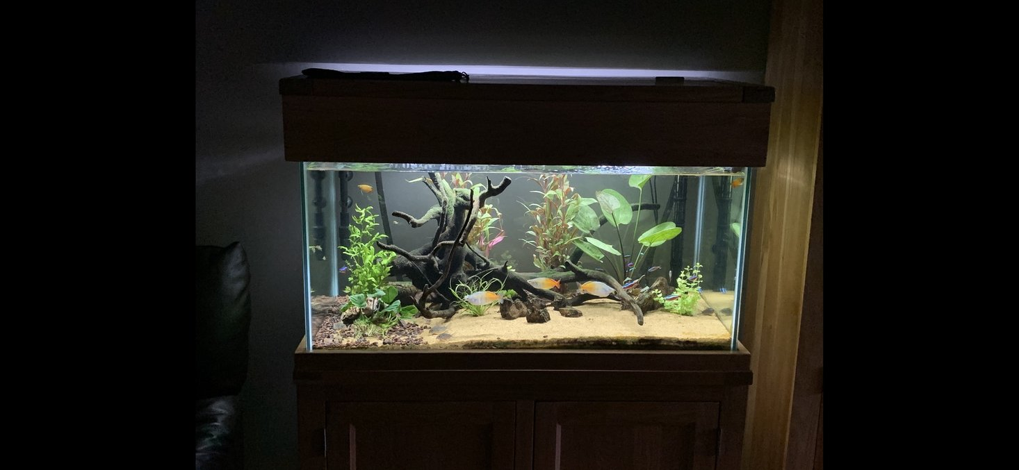 55 gallons freshwater fish tank (mostly fish and non-living decorations) - 220 litre aqua oak community