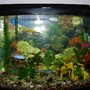 30 gallons freshwater fish tank (mostly fish and non-living decorations) - 30 gal