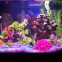 20 gallons freshwater fish tank (mostly fish and non-living decorations) - 20 gal.