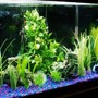 55 gallons freshwater fish tank (mostly fish and non-living decorations) - 55gallon