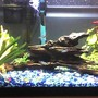 10 gallons freshwater fish tank (mostly fish and non-living decorations) - As close a shot that I could get and still get the whole tank in the picture. --- Fake yellow coral and two fake plants on the left. A wood centerpiece and some of my tetras in the middle, and two more fake plants and my fish cave on the right. --- My betta is hiding inbetween the filter and the heater near the top. --- (photo shot with my phone, sorry for the quality)