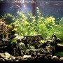 29 gallons freshwater fish tank (mostly fish and non-living decorations) - Old House & Bridge Theme