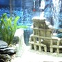 30 gallons freshwater fish tank (mostly fish and non-living decorations) - The Greek Tank