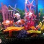 140 gallons freshwater fish tank (mostly fish and non-living decorations) - 20c goldfish/50 cory 1 upside down cats