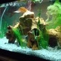 55 gallons freshwater fish tank (mostly fish and non-living decorations) - my 20 gallon