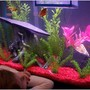 55 gallons freshwater fish tank (mostly fish and non-living decorations) - Eleanor looking at her fish