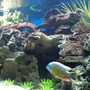 90 gallons freshwater fish tank (mostly fish and non-living decorations) - Diff.View2