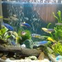20 gallons freshwater fish tank (mostly fish and non-living decorations) - 3 weeks tank