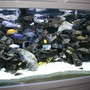 210 gallons freshwater fish tank (mostly fish and non-living decorations) - my show tank