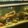 250 gallons freshwater fish tank (mostly fish and non-living decorations) - 250 gal