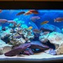 70 gallons freshwater fish tank (mostly fish and non-living decorations) - my tank