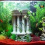freshwater fish tank (mostly fish and non-living decorations) - fish