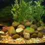150 gallons freshwater fish tank (mostly fish and non-living decorations) - 150g S.A. cichlids