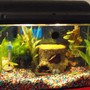 10 gallons freshwater fish tank (mostly fish and non-living decorations) - little girl tank