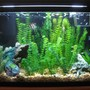 40 gallons freshwater fish tank (mostly fish and non-living decorations) - the old tank