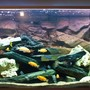 80 gallons freshwater fish tank (mostly fish and non-living decorations) - 1st version ..