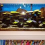 90 gallons freshwater fish tank (mostly fish and non-living decorations) - 90 gallon in wall tank with bookshelf