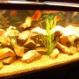 125 gallons freshwater fish tank (mostly fish and non-living decorations) - 125 gallon cichlid tank