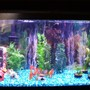 55 gallons freshwater fish tank (mostly fish and non-living decorations) - My freshwater setup.