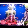 55 gallons freshwater fish tank (mostly fish and non-living decorations) - school
